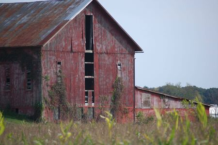 Barn with ripped side in amish country, ohio photo
