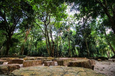 dhamma: rock and tree shady dhamma retreat