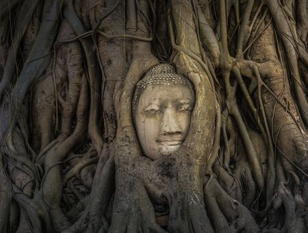 cabeza de buda: IMAGEN DE BUDDHA CABEZA EN TRONCO Foto de archivo