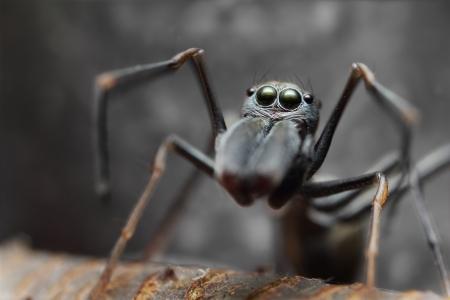 Spider ant Stock Photo - 17360774