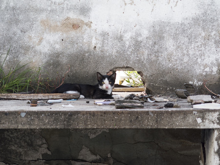vagrant: the vagrant cat is sitting on a deserted building Stock Photo