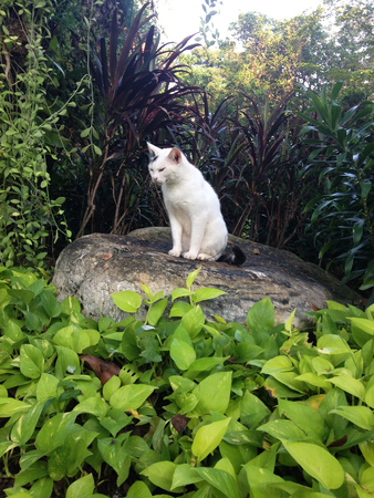 vagrant: the vagrant cat is sitting on a stone in park