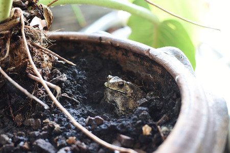 croak: closed up the toad in a pot