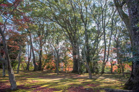 tress: view of maple tress in a park Stock Photo