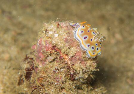 nudibranch: closed up the nudibranch in Myanmar divesite Stock Photo