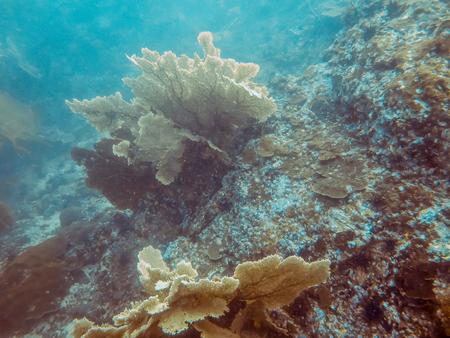 gorgonian sea fan: the big sea fan in Myanmar divesite
