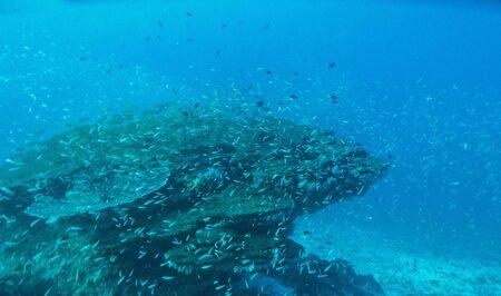 view of underwater in Anilao, Philippiines