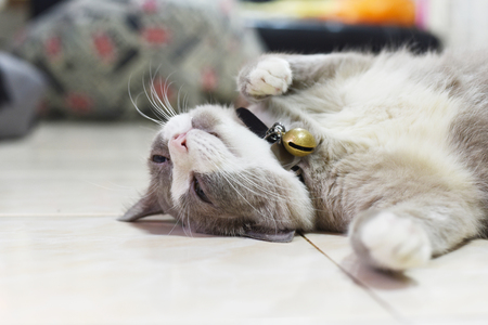 the fatty grey cat is sleeping on the floor