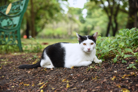 the black and white cat is sitting on a park