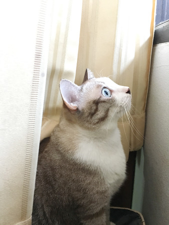 Closed up the cat is looking something outside a window Stock Photo