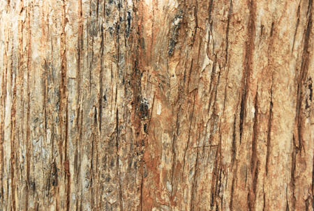 closed up the wood wall background