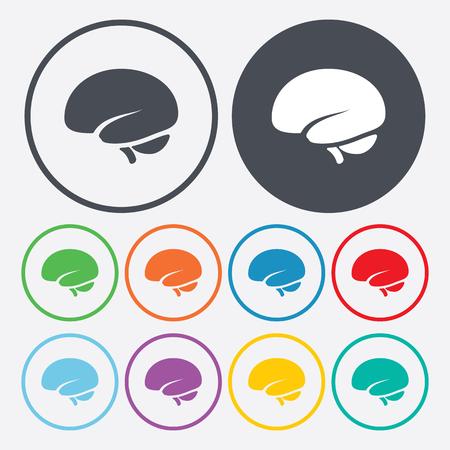 brain illustration: vector illustration of modern b lack icon brain
