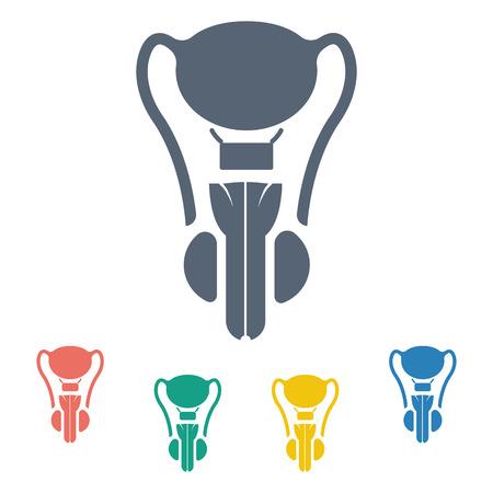 testicles: vector illustration of modern b lack icon male organ