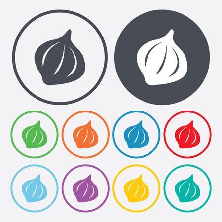 garlic clove: Vector illustration of food icon