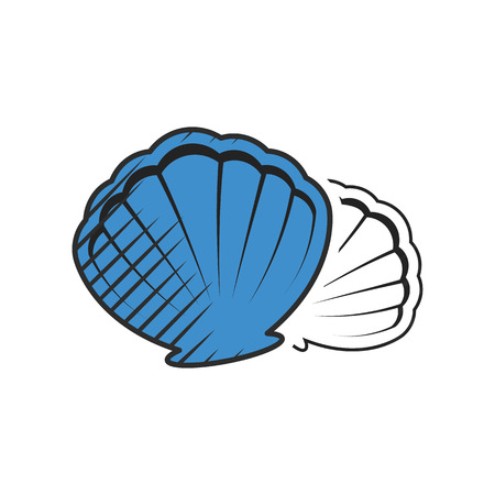 sea shell: shell icon on white background for web
