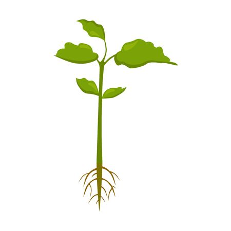 seedlings: Plant icon of vector illustration for web and mobile design Illustration