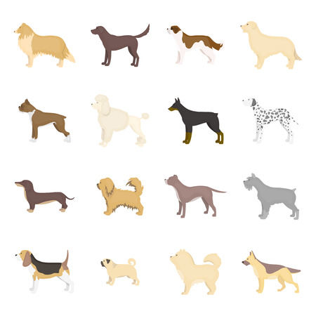 saint bernard: Dog breeds vector icon set in cartoon style for web design.