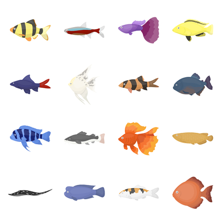 cyphotilapia: Aquarium fish 16 vector icon set in cartoon style for web design.
