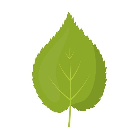 linden tree: Linden leaf vector illustration icon in cartoon design Illustration