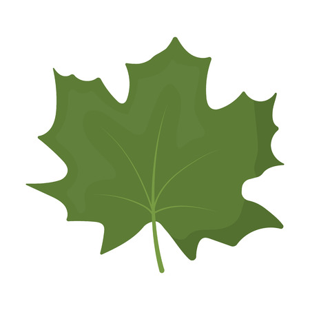 halifax: Maple Leaf vector illustration icon in cartoon design
