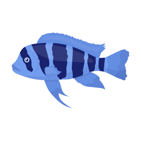 cichlid: Frontosa Cichlid (Cyphotilapia Frontosa) fish icon cartoon. Singe aquarium fish icon from the sea,ocean life collection. Illustration