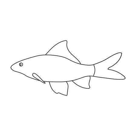 shark catfish: Red Tail Shark fish icon line. Singe aquarium fish icon from the sea,ocean life collection. Illustration