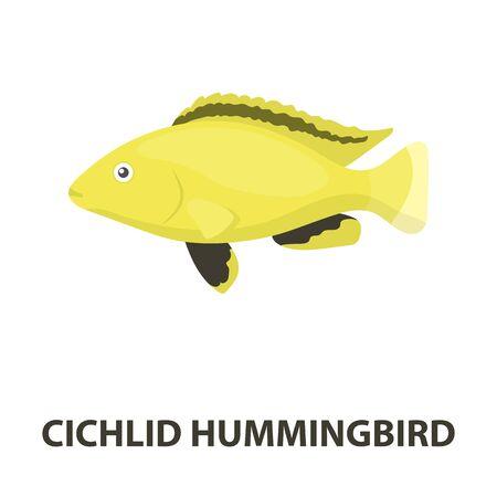 Cichlid hummingbird fish icon cartoon. Singe aquarium fish icon from the sea,ocean life cartoon. Illustration