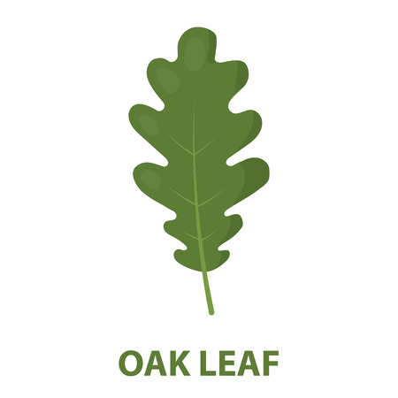 Icono de ilustración de vector de Oak Leaf en diseño de dibujos animados