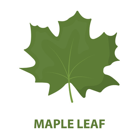 edmonton: Maple Leaf vector illustration icon in cartoon design