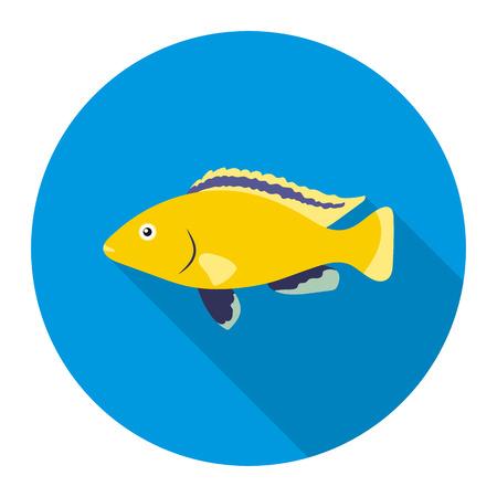 cichlid: Cichlid hummingbird fish icon flat. Singe aquarium fish icon from the sea,ocean life flat.