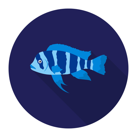 large cichlid: Frontosa Cichlid Cyphotilapia Frontosa fish icon flat. Singe aquarium fish icon from the sea,ocean life flat.