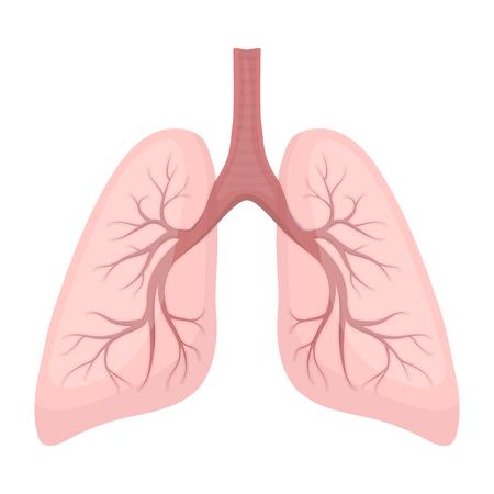 漫画のスタイルの白い背景で隔離の肺のアイコン。臓器シンボル ベクトル イラスト。 写真素材 - 63194957