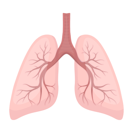 Lungs icon in cartoon style isolated on white background. Organs symbol vector illustration.