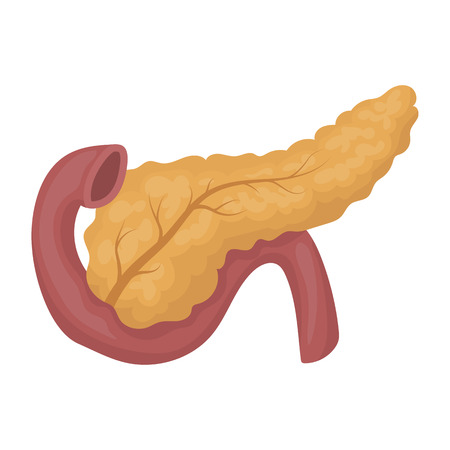 pancreas: Pancreas icon in cartoon style isolated on white background. Organs symbol vector illustration.