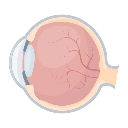 Eyeball icon in cartoon style isolated on white background. Organs symbol vector illustration.