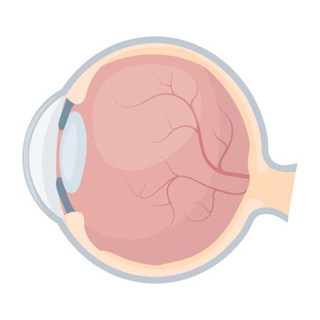 sclera: Eyeball icon in cartoon style isolated on white background. Organs symbol vector illustration.
