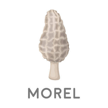 morel: Morel icon in cartoon style isolated on white background. Mushroom symbol vector illustration.