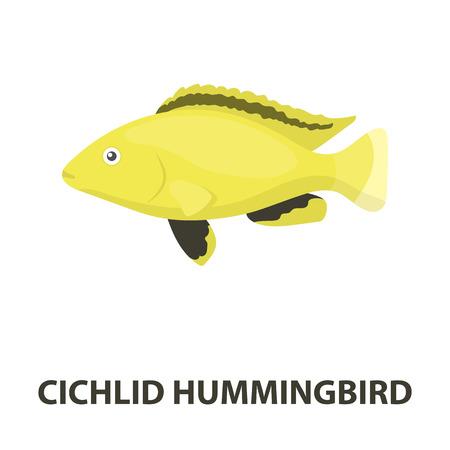 cichlid: Cichlid hummingbird fish icon cartoon. Singe aquarium fish icon from the sea,ocean life cartoon. Stock Photo