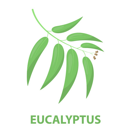 gum tree: Eucalyptus rastr illustration icon in cartoon design