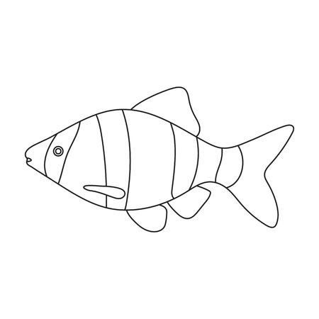 barbus: Barbus fish icon line. Singe aquarium fish icon from the sea,ocean life collection.