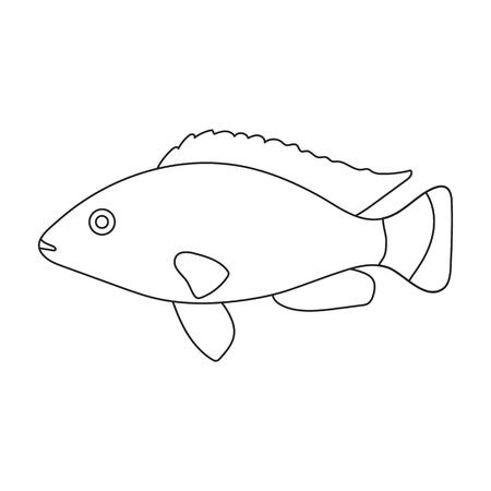 cichlid: Cichlid hummingbird fish icon line. Singe aquarium fish icon from the sea,ocean life collection. Stock Photo