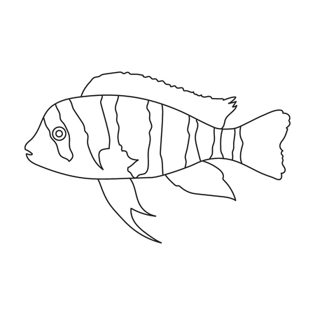 large cichlid: Frontosa Cichlid Cyphotilapia Frontosa fish icon line. Singe aquarium fish icon from the sea,ocean life collection. Stock Photo
