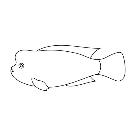 headed: Stearocranus fish icon line. Singe aquarium fish icon from the sea,ocean life collection.