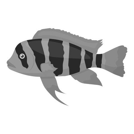 cichlid: Frontosa Cichlid (Cyphotilapia Frontosa) fish icon monochrome. Singe aquarium fish icon from the sea,ocean life monochrome. Illustration