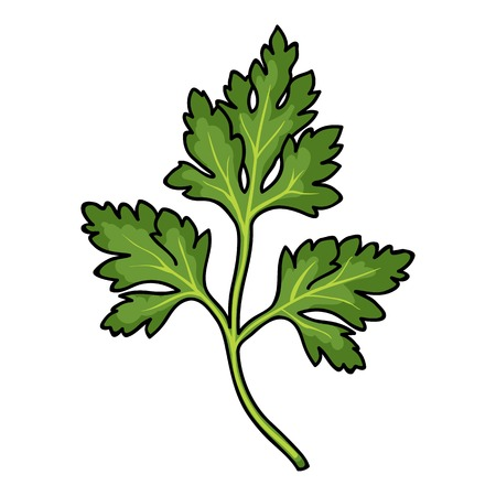 Parsley icon in cartoon style isolated on white background. Herb an spices symbol vector illustration.