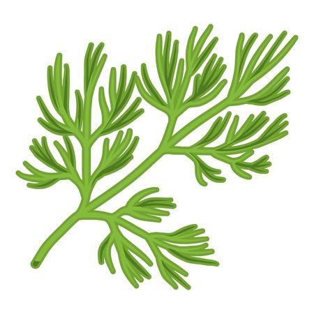 dill: Dill icon in cartoon style isolated on white background. Herb an spices symbol vector illustration.