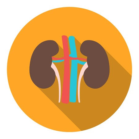 wastes: Kidney icon in flat style isolated on white background. Organs symbol vector illustration.