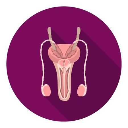 aparato reproductor: Hombre icono del sistema reproductivo en estilo plano aislado en el fondo blanco. Órganos ilustración vectorial símbolo.