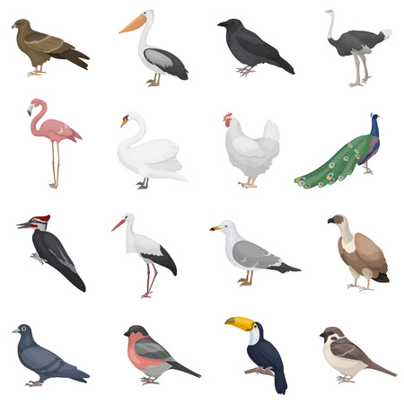 Bird set icons in cartoon style. Big collection bird vector symbol stock Illustration
