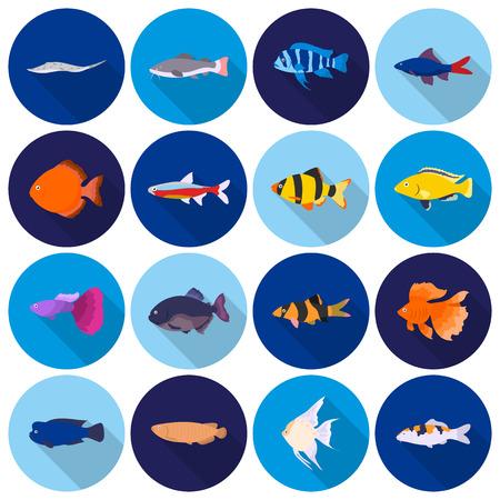 fish type: Aquarium fish set icons in flat style. Big collection aquarium fish vector symbol stock